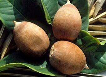 Aceites vegetales para la elaboración de cosmética natural