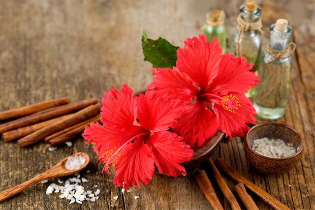 Beneficios del extracto de hibisco
