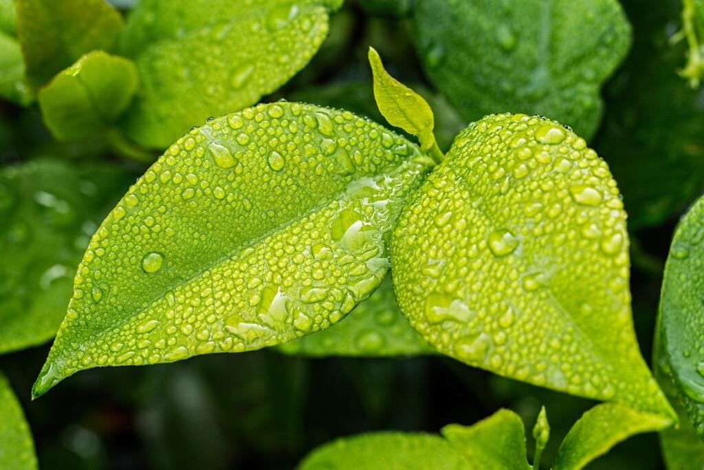 Las asombrosas propiedades de las células madre vegetales