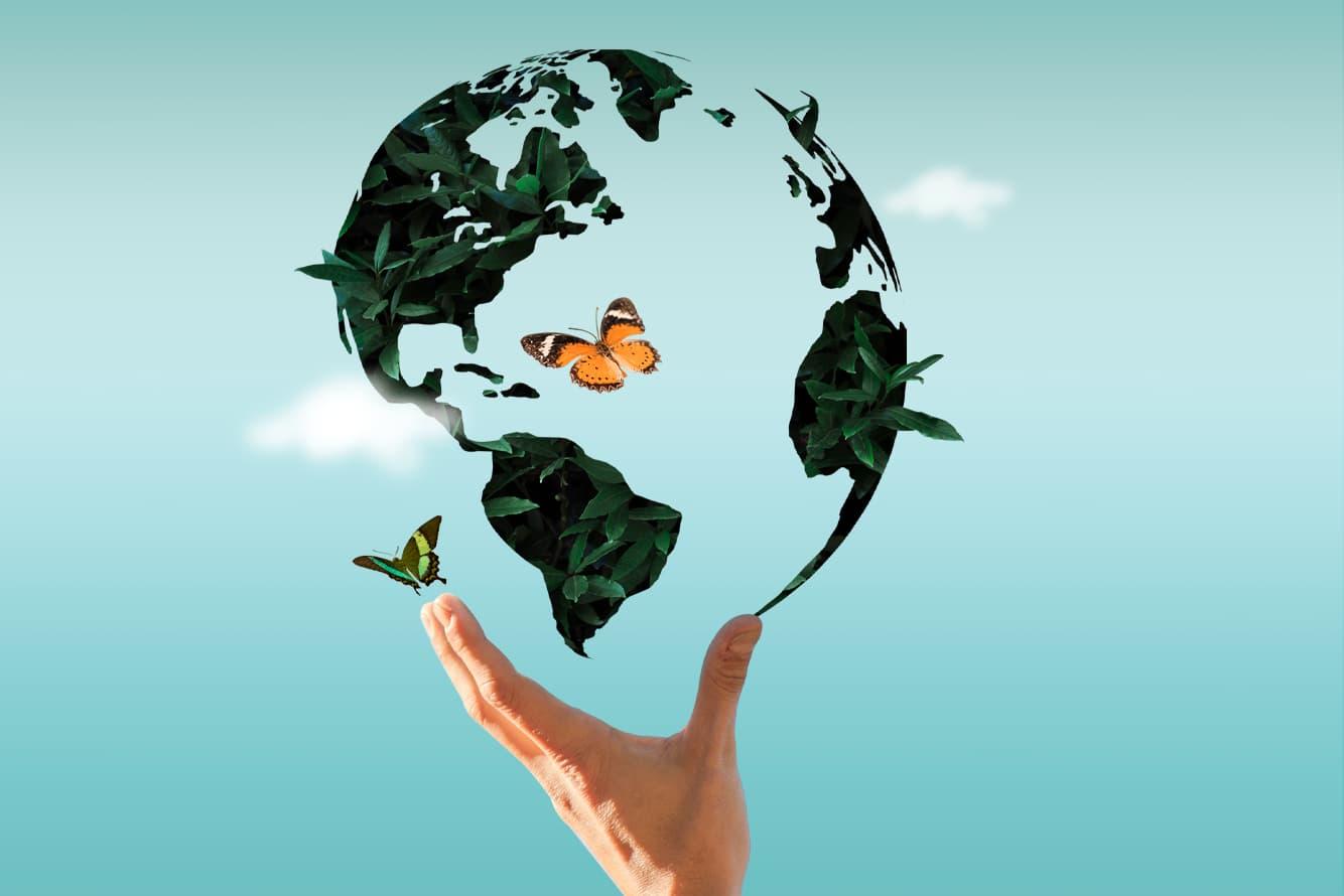 ¿Cómo contribuir al cuidado del Medio Ambiente?